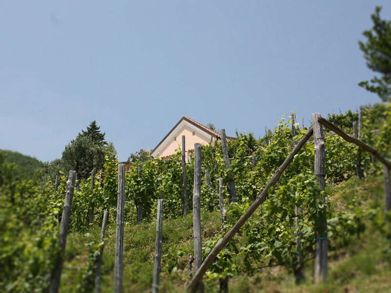 vineyards5